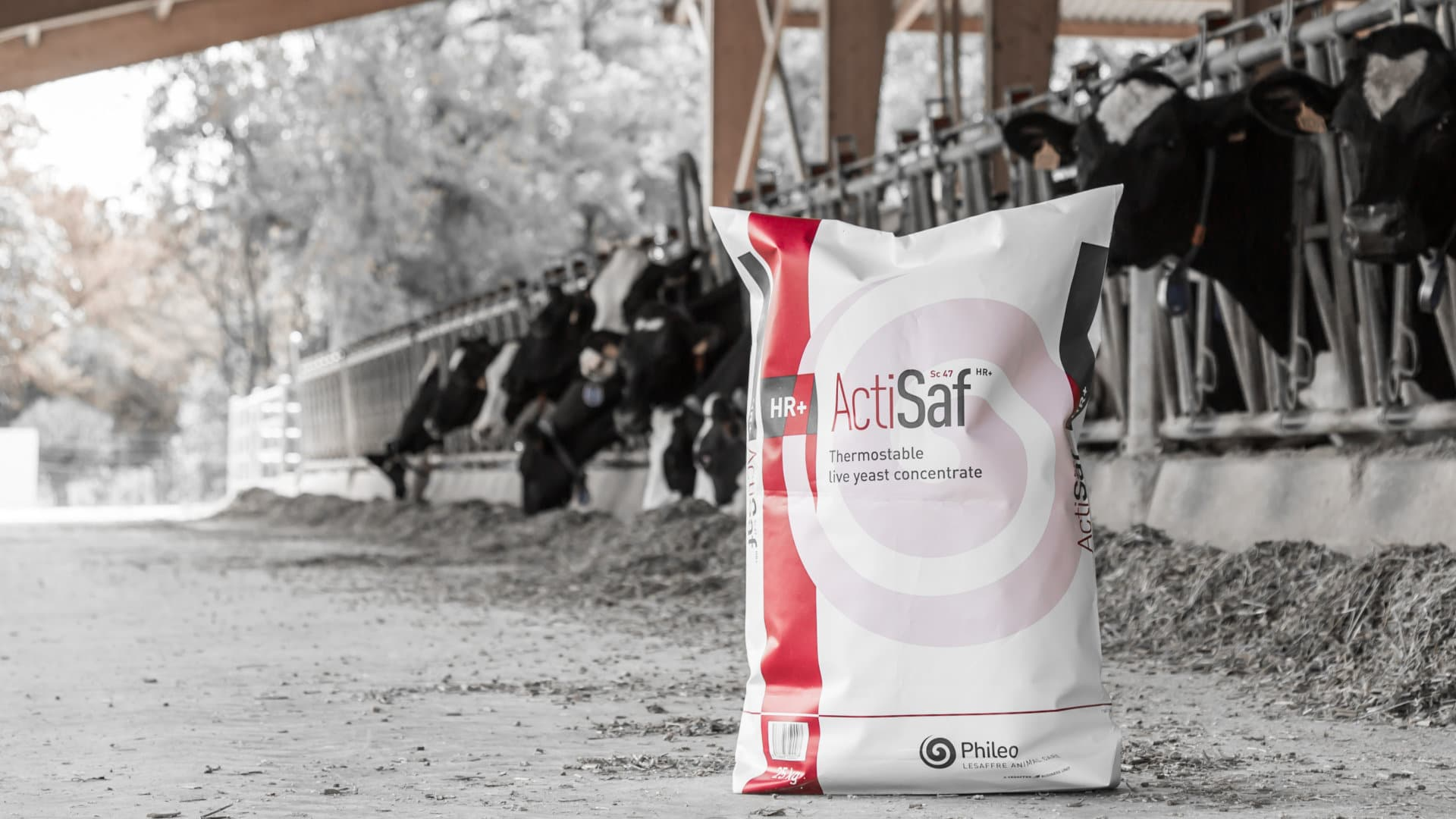 Actisaf packaging - Concentrate of live yeast dedicated to animal nutrition