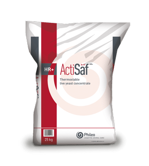 Packaging of thermostable live yeast concentrate - Actisaf HR+