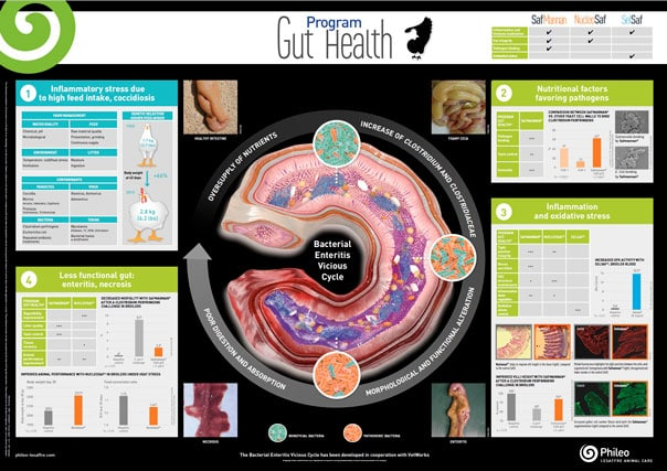 program gut health
