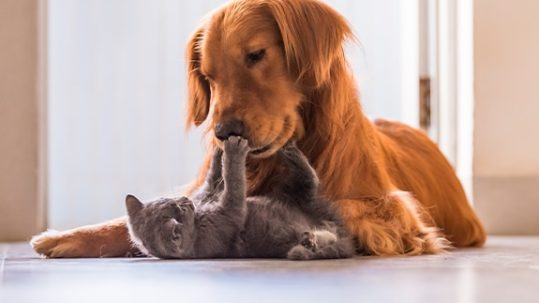 exciting future for pet health