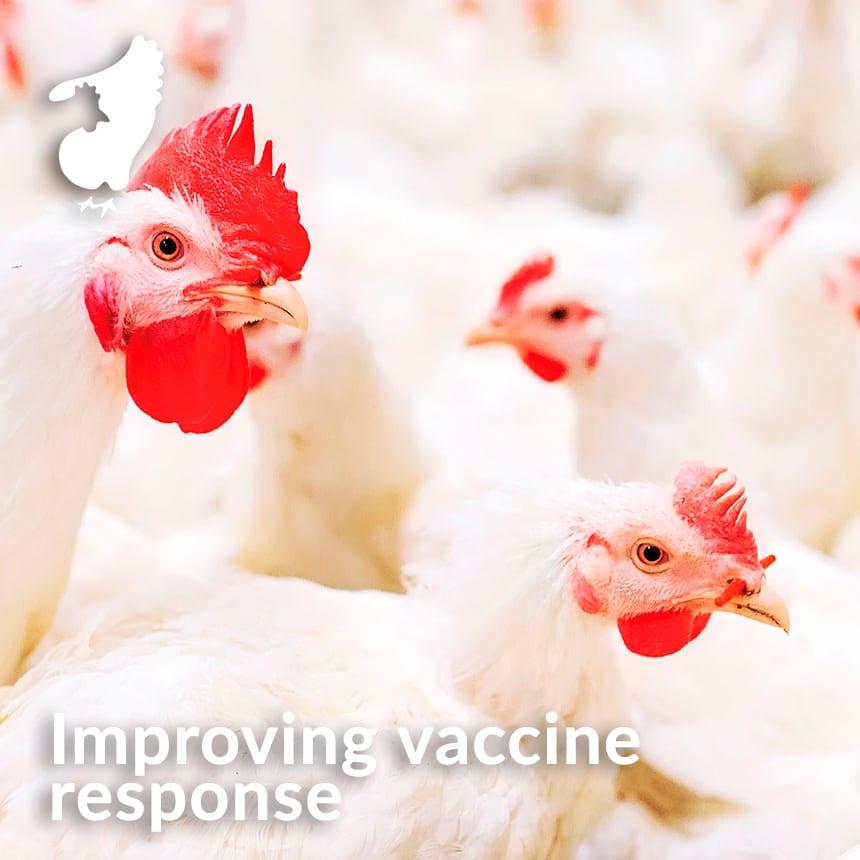 mejorar la respuesta vacunal