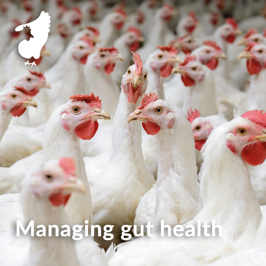 Managing gut health