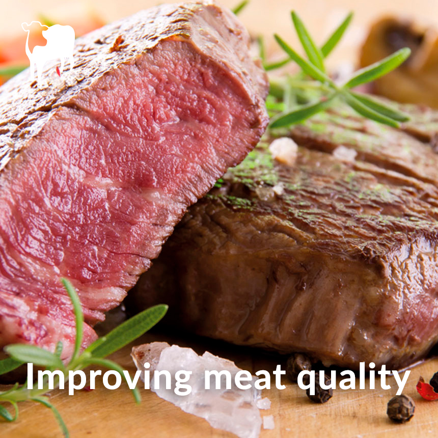 meat quality beef