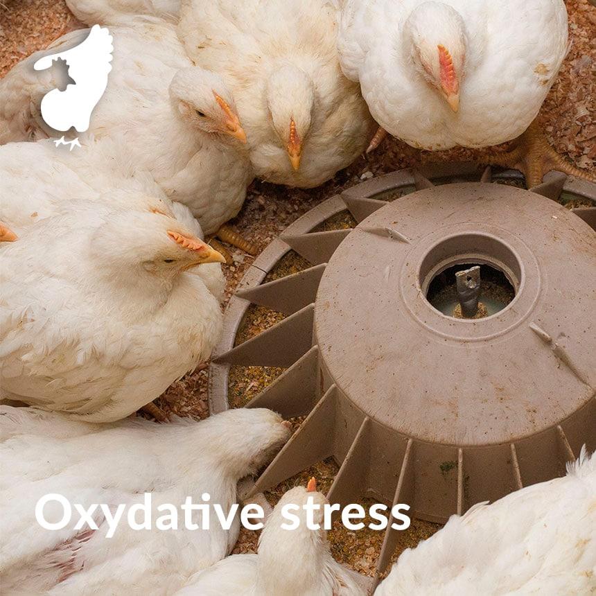 estresse de oxidação