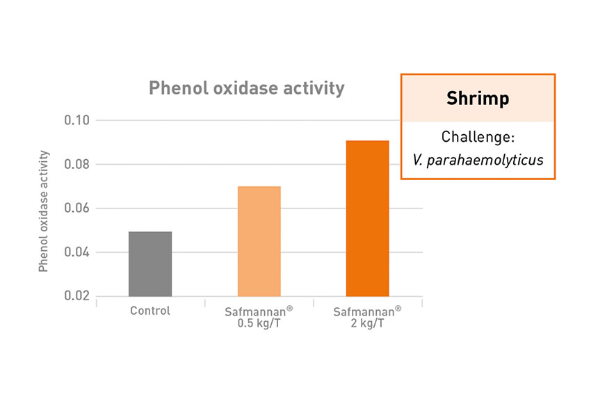 phenol aquaculture shrimp