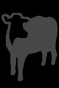 picto ganado lechero