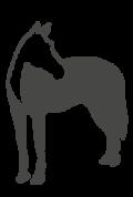picto caballos