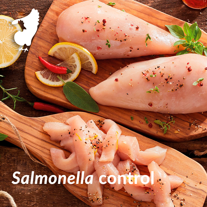 salmonella control