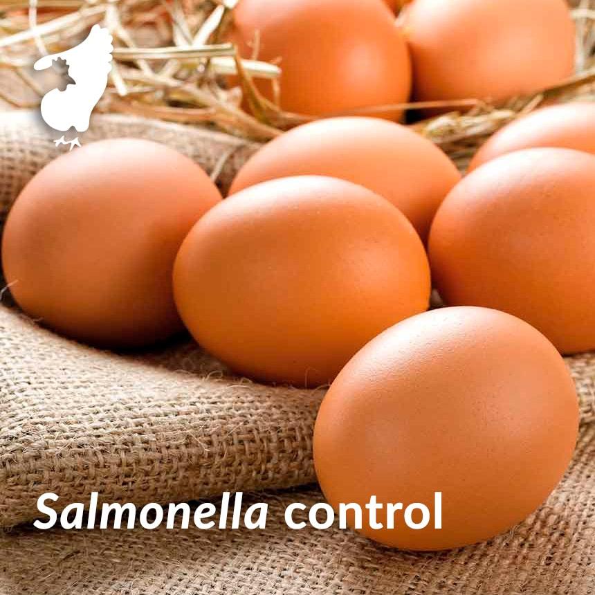 salmonella control layers