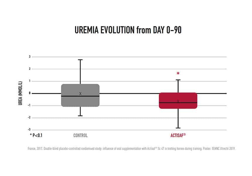 Uremia evolution horses