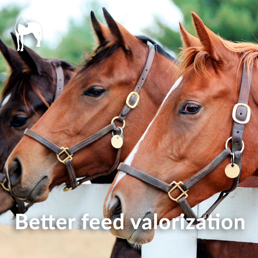 better feed horses