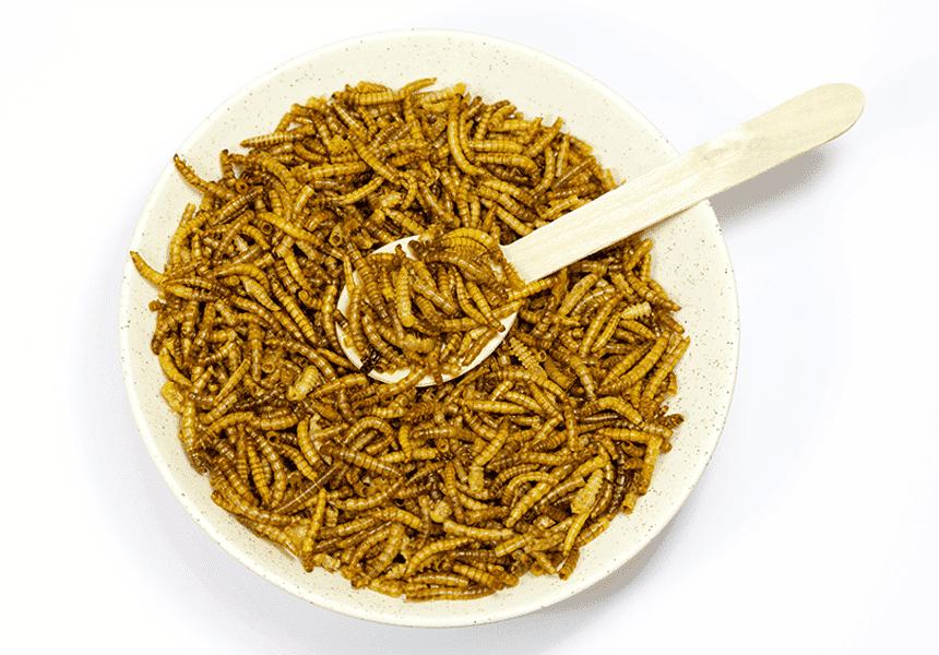 manejo de la salud insectos