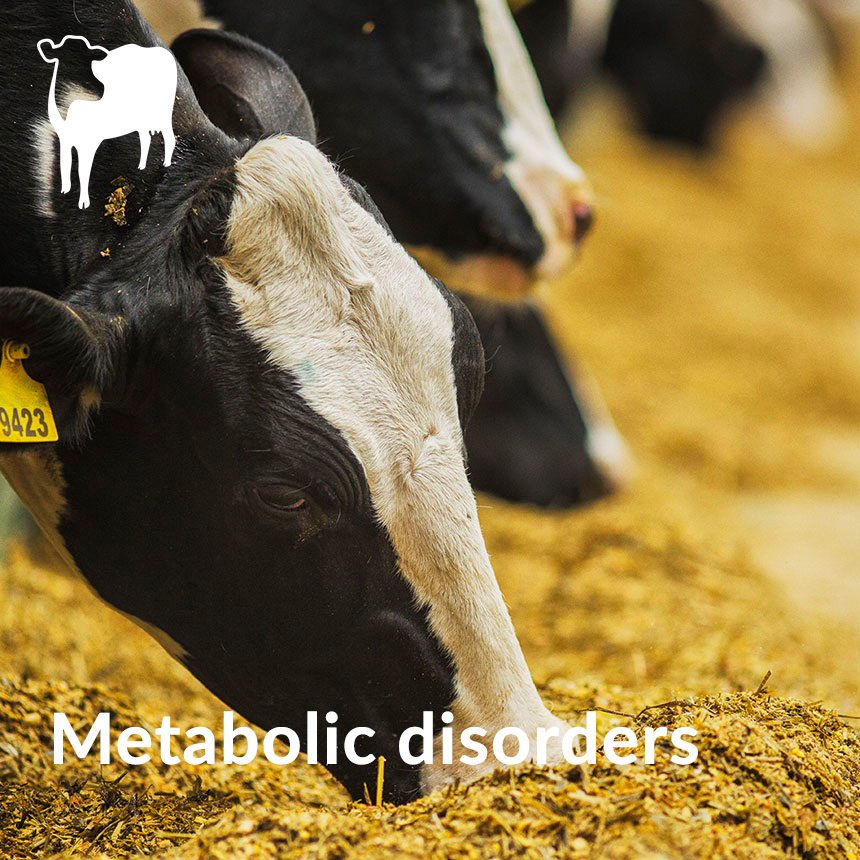 dairy metabolic disorders