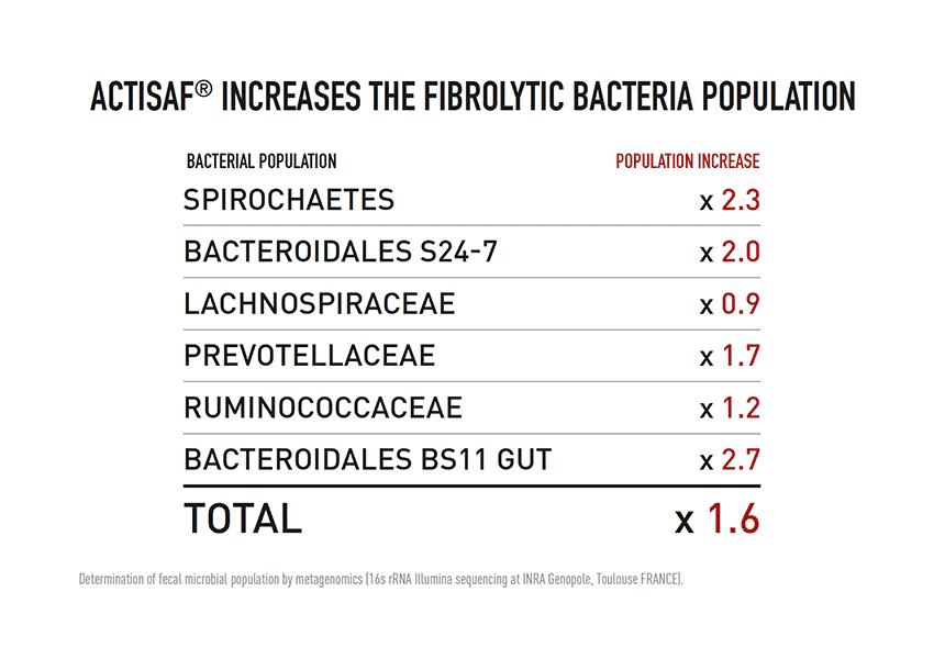 horse bacteria microbiota