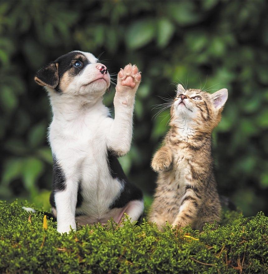 pets immunity