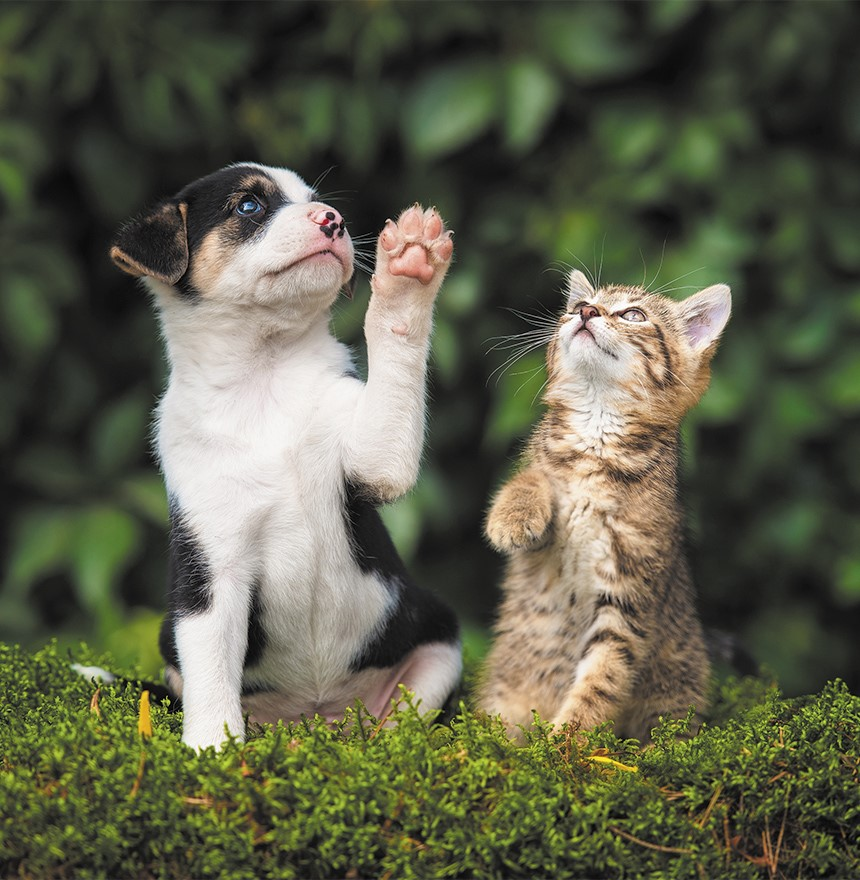 mascotas inmunidad