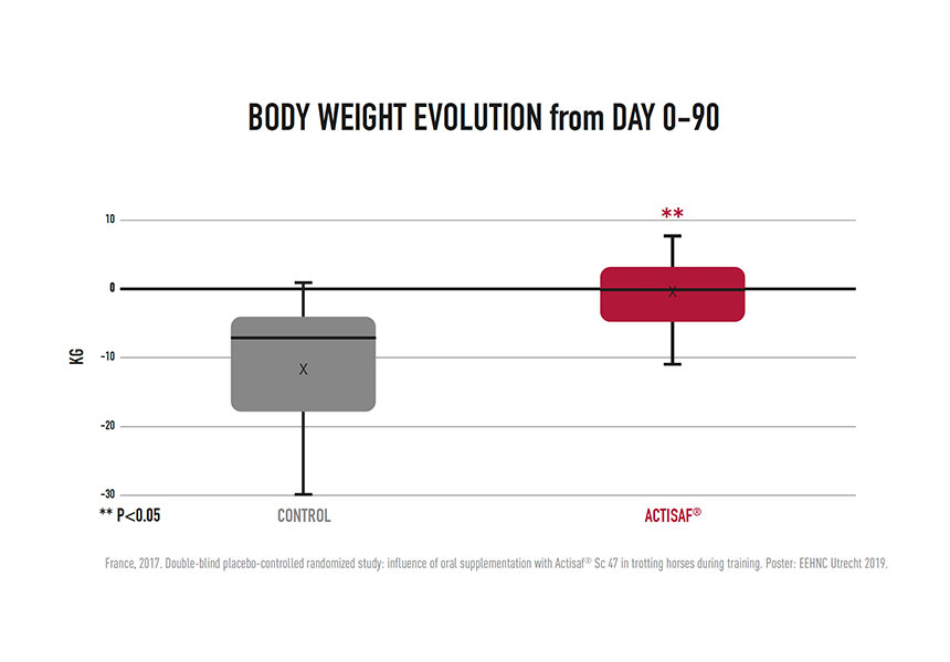 body weight evolution horses