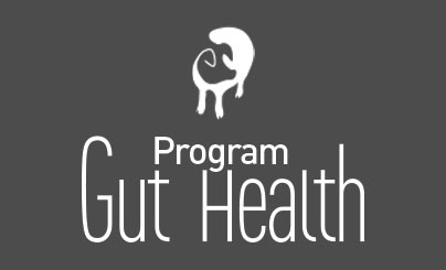 gut health swine