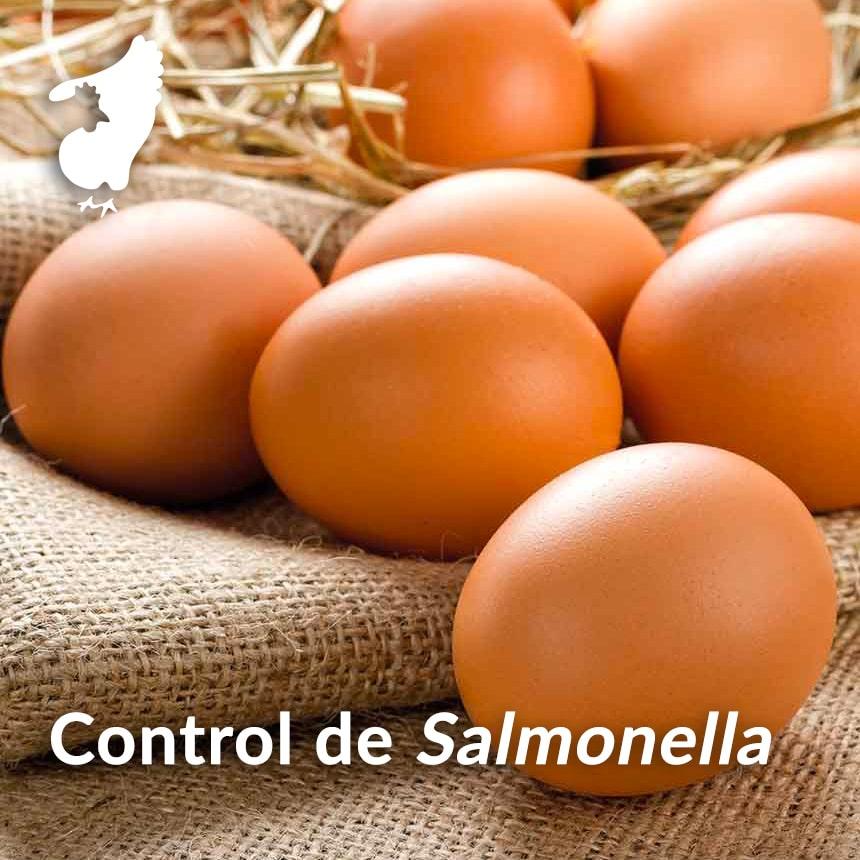 Control-de-Salmonella-en-ponedoras