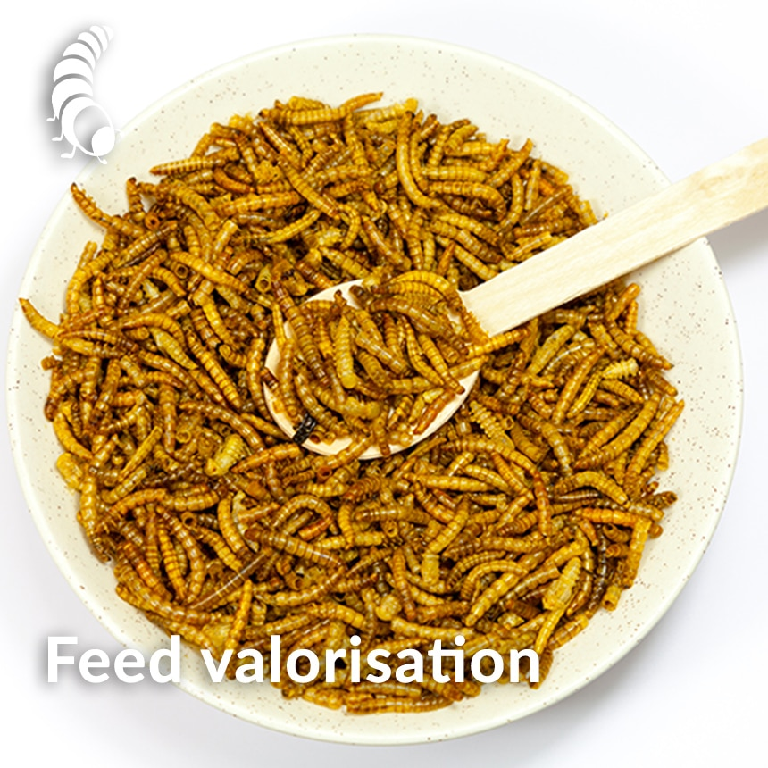 feed valorization