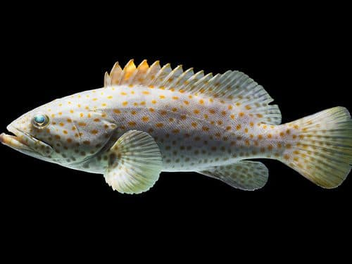 aquaculture phileo by lesaffre