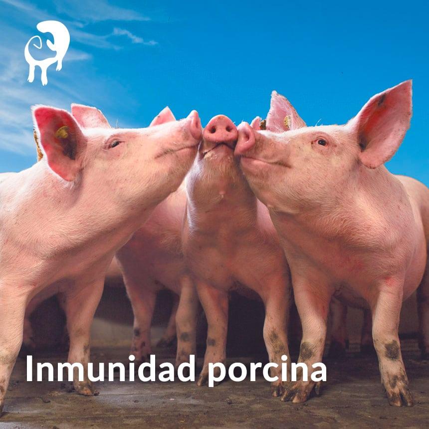 Inmunidad-porcina