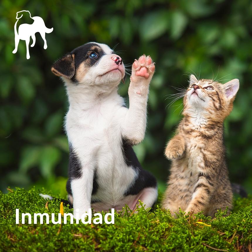 inmunidad mascotas