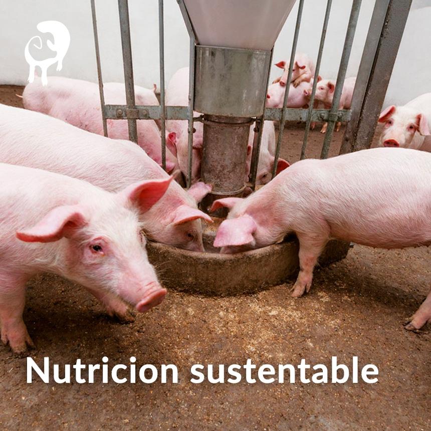 Nuticion-sustenable