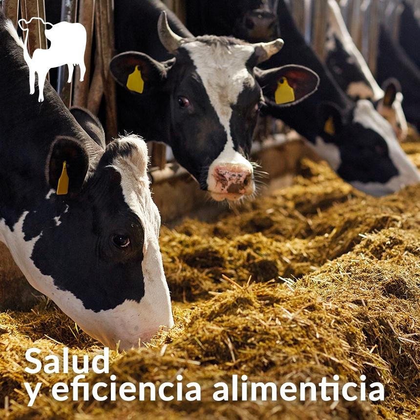 Salud-del-rumen-del-ganado-lechero-y-eficiencia-alimenticia