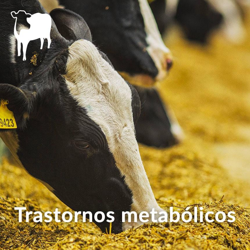 Trastornos-metabolicos-en-ganado-lechero