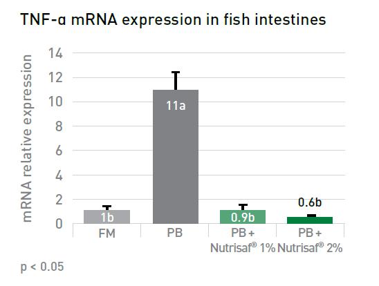 fish intestines