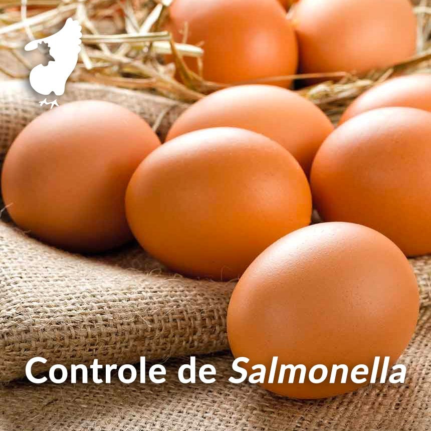 Controle-de-Salmonella