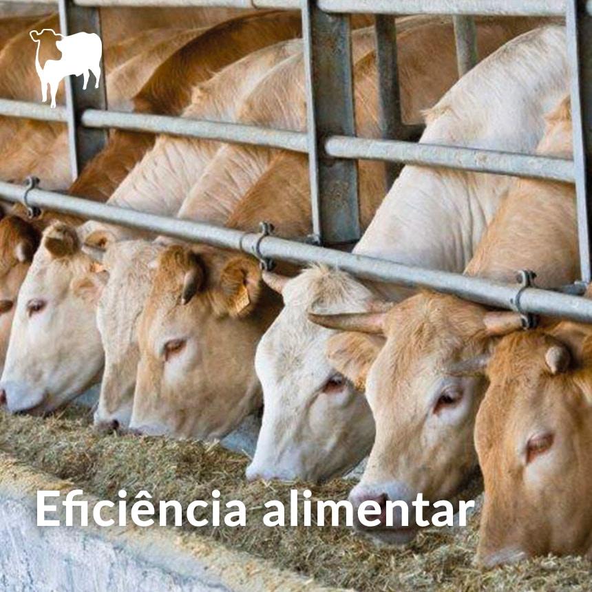 Eficiencia-alimentar