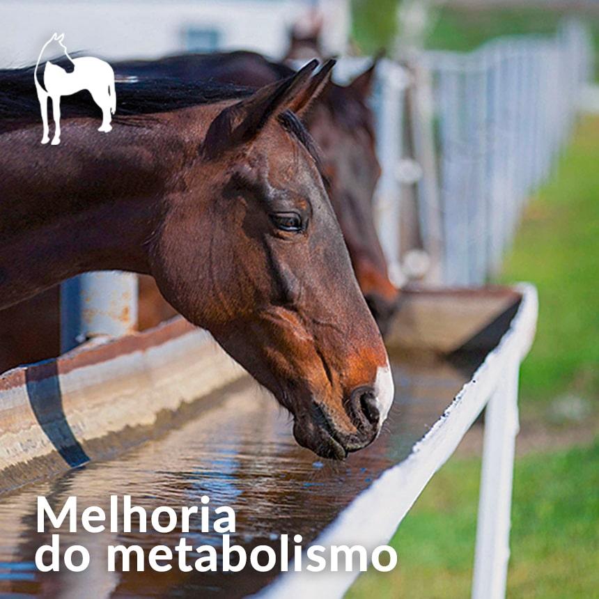 Melhoria-do-metabolismo