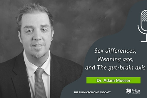 Sex differences, weaning age, and the gut-brain axis