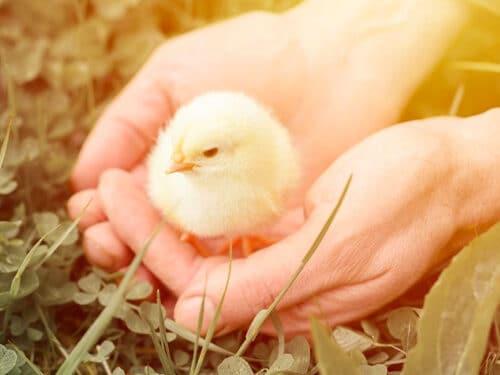 postbiotics poultry
