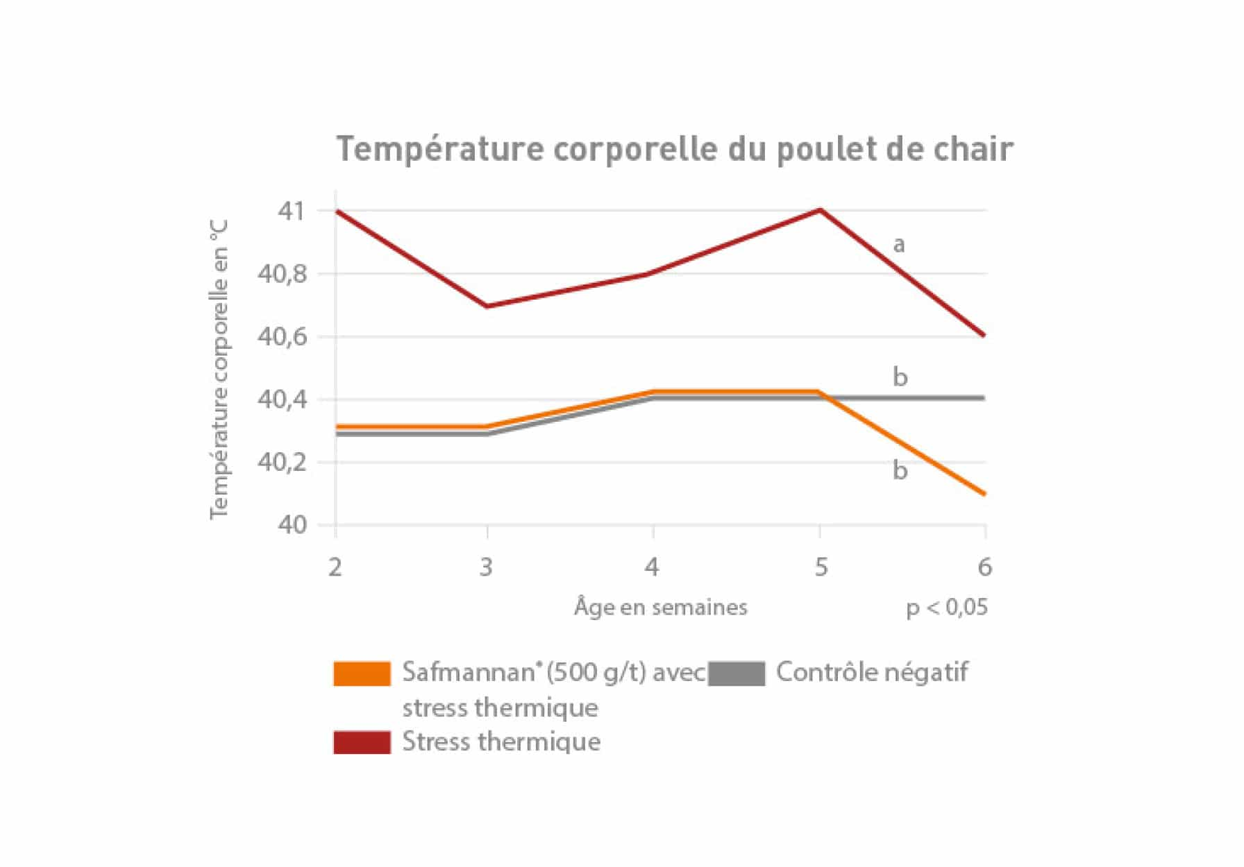 Poulets de chair stress thermique